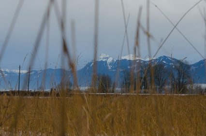 Mt. Cheam through the grass