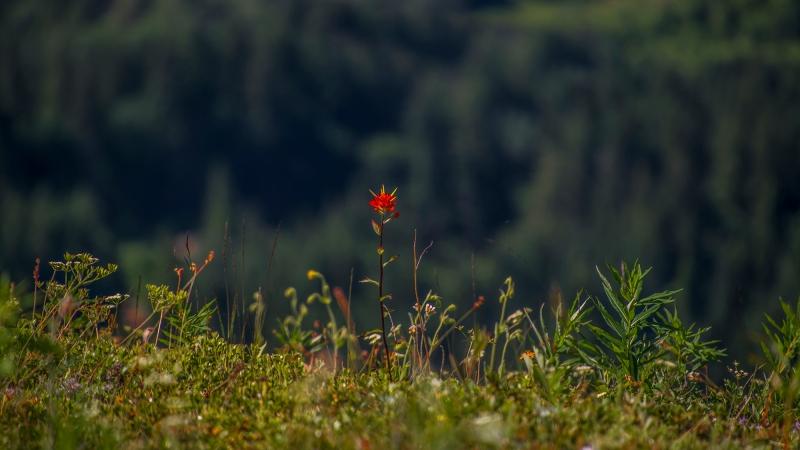 Elk Thurston Trail – ChilliwackBC